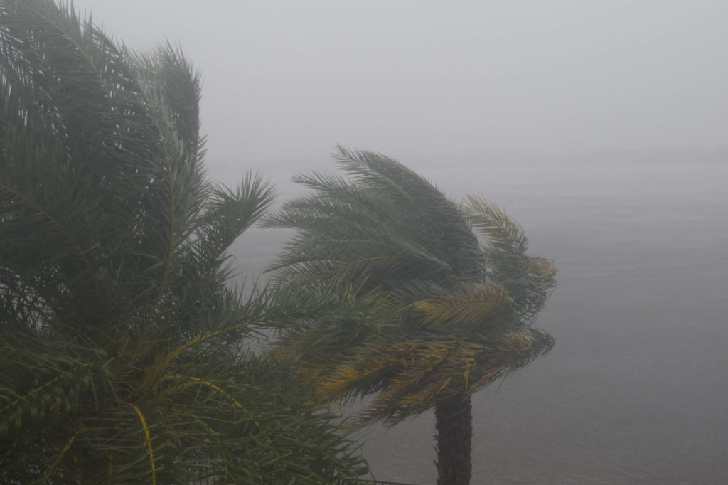 palm trees in hurricane demonstrate the need for impact window systems