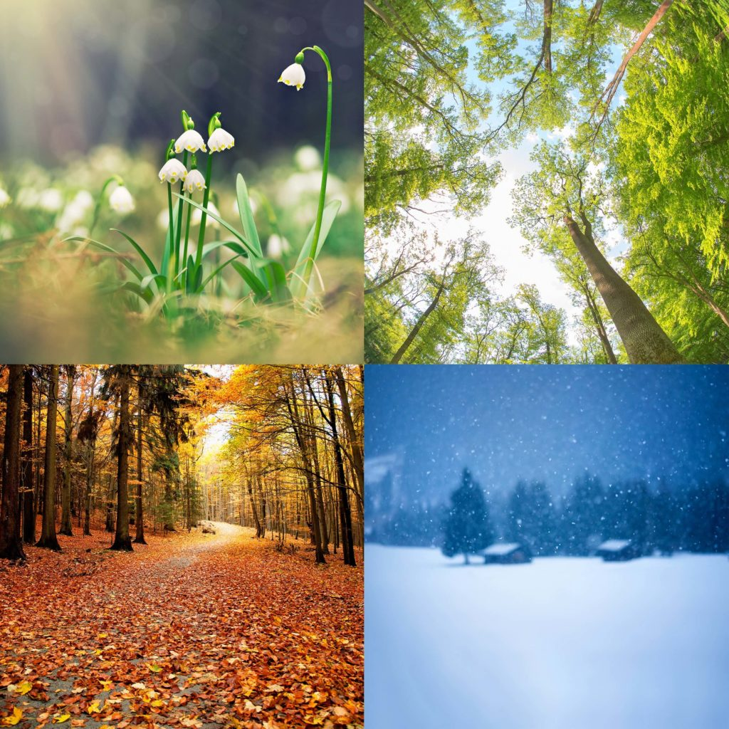 montage of 4 photos showing the seasons